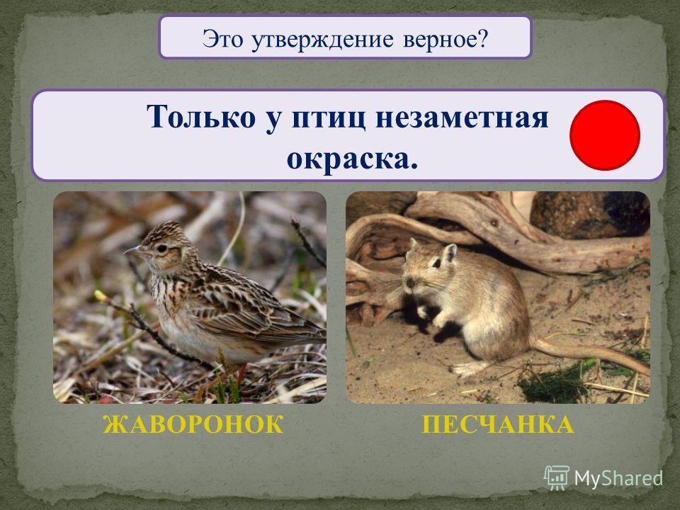 Это утверждение верное? Только птицы вылупляются из яиц. ПИТОН ПТЕНЕЦ ЖУРАВЛЯ