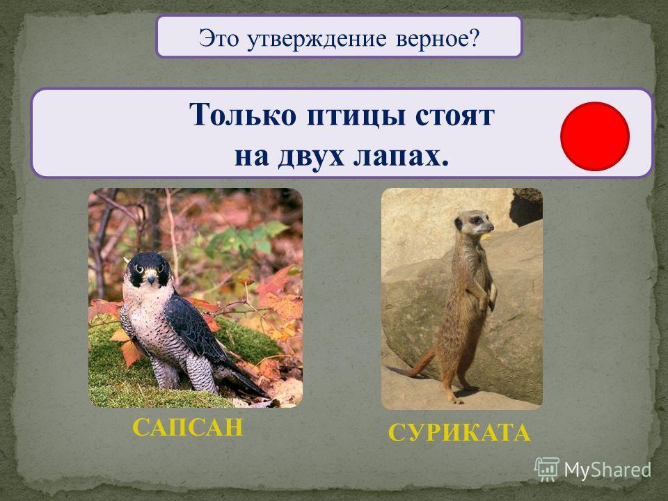 Это утверждение верное? Только у птиц незаметная окраска. ЖАВОРОНОКПЕСЧАНКА