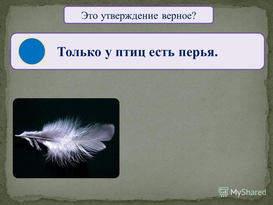 Это утверждение верное? Только птицы стоят на двух лапах. САПСАН СУРИКАТА