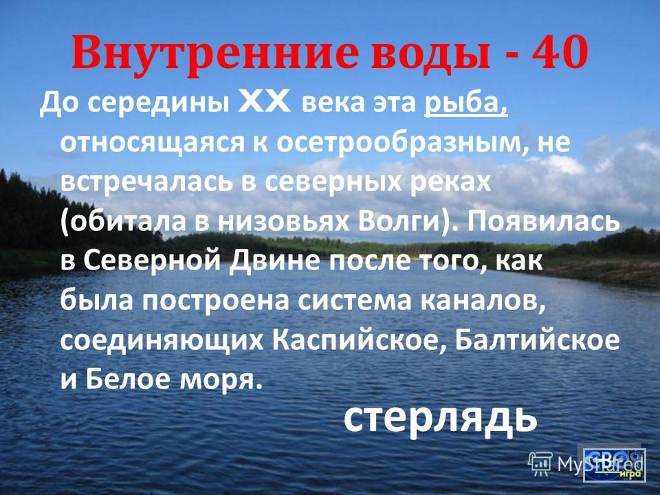 Внутренние воды - 40 До середины XX века эта рыба, относящаяся к осетрообразным, не встречалась в северных реках ( обитала в низовьях Волги ). Появилась в Северной Двине после того, как была построена система каналов, соединяющих Каспийское, Балтийск
