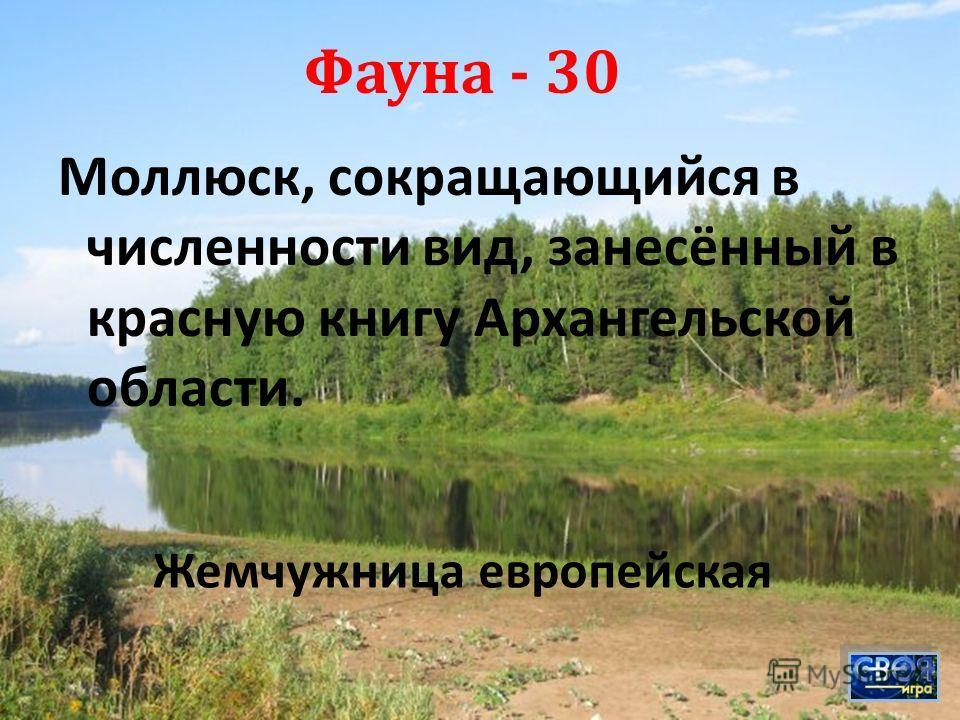 Моллюск, сокращающийся в численности вид, занесённый в красную книгу Архангельской области. Фауна - 30 Жемчужница европейская