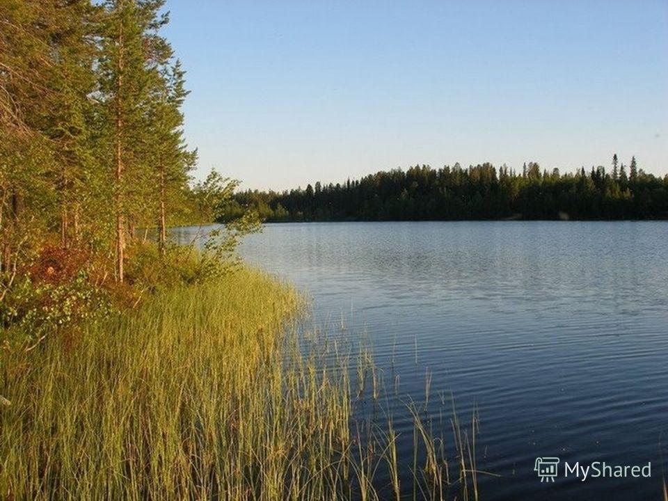 Финляндия занимает задние лапы полуострова- тигра Если посмотришь на карту, то обратишь внимание на множество озёр Финляндию называют страной тысячи озёр На самом деле их здесь 180 тысяч Озёра славятся чистой водой, красивыми берегами