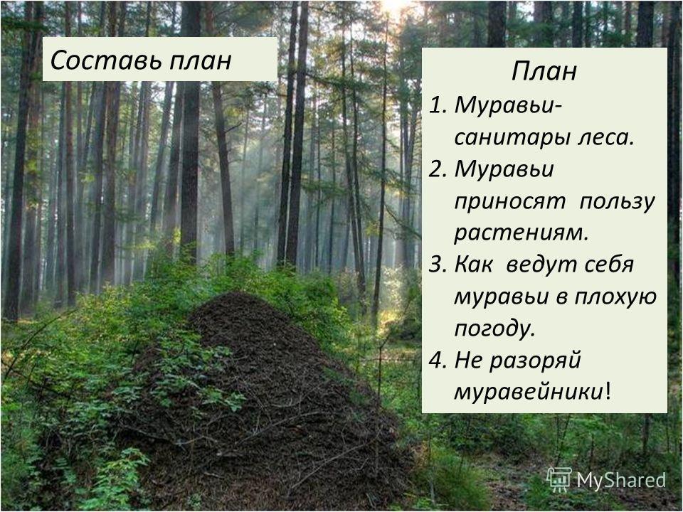 План 1.Муравьи- санитары леса. 2.Муравьи приносят пользу растениям. 3.Как ведут себя муравьи в плохую погоду. 4.Не разоряй муравейники! Составь план