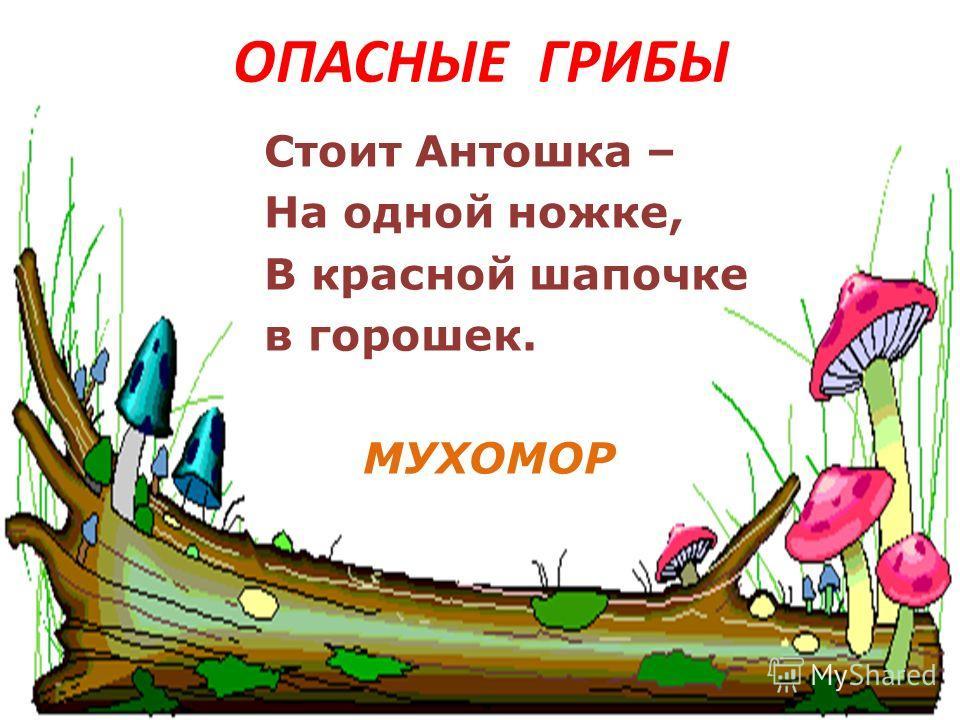 ОПАСНЫЕ ГРИБЫ Стоит Антошка – На одной ножке, В красной шапочке в горошек. МУХОМОР