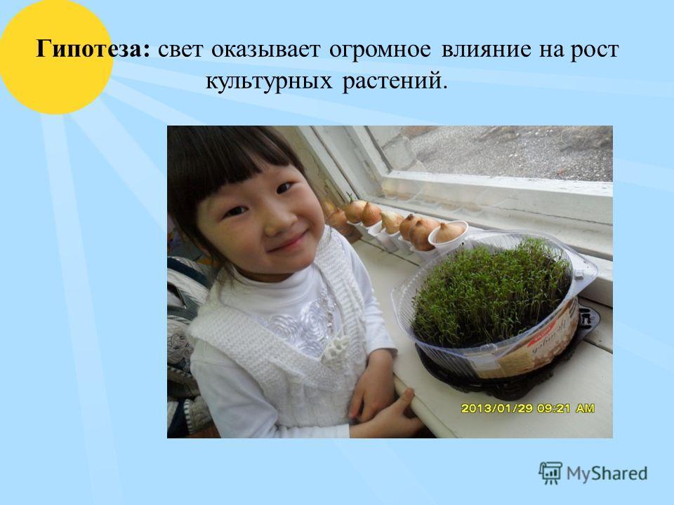 Гипотеза: свет оказывает огромное влияние на рост культурных растений.