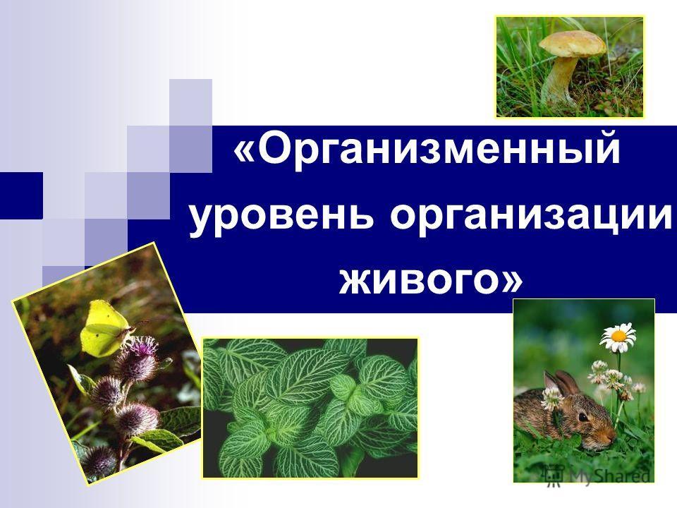 «Организменный уровень организации живого»