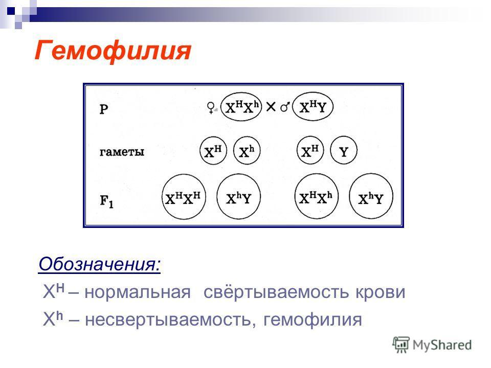 Гемофилия Обозначения: Х Н – нормальная свёртываемость крови X h – несвертываемость, гемофилия