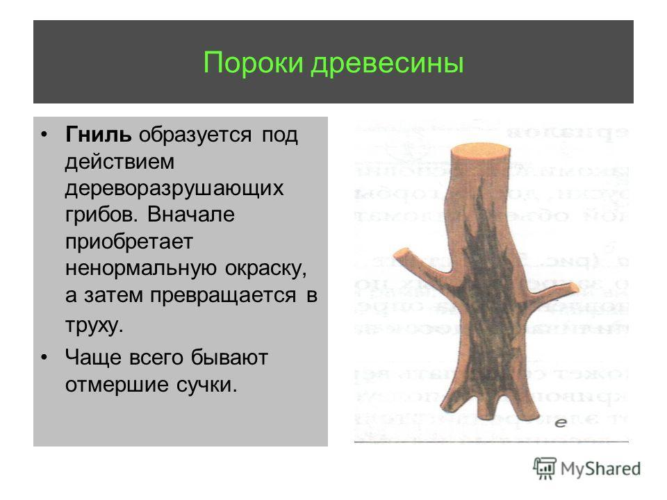 Пороки древесины Гниль образуется под действием дереворазрушающих грибов. Вначале приобретает ненормальную окраску, а затем превращается в труху. Чаще всего бывают отмершие сучки.