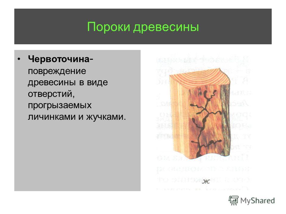 Пороки древесины Червоточина - повреждение древесины в виде отверстий, прогрызаемых личинками и жучками.