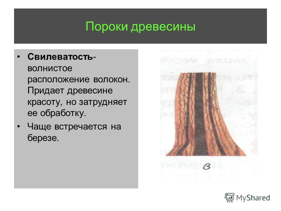 Пороки древесины Свилеватость- волнистое расположение волокон. Придает древесине красоту, но затрудняет ее обработку. Чаще встречается на березе.