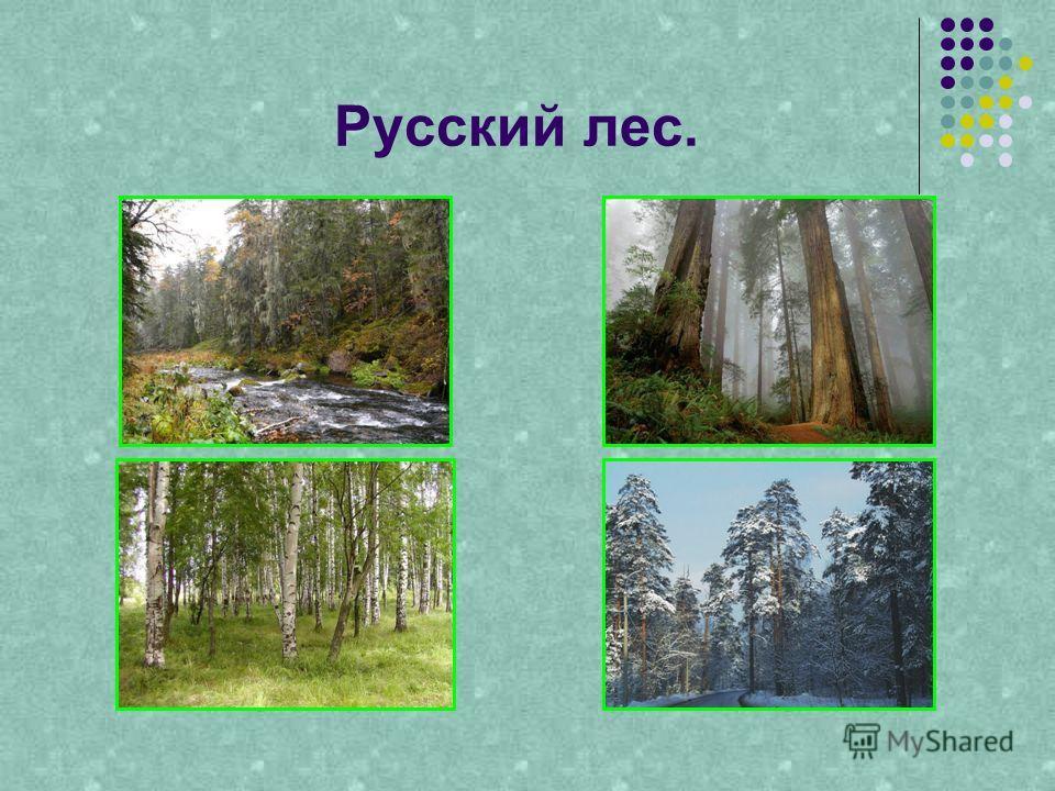 Русский лес.