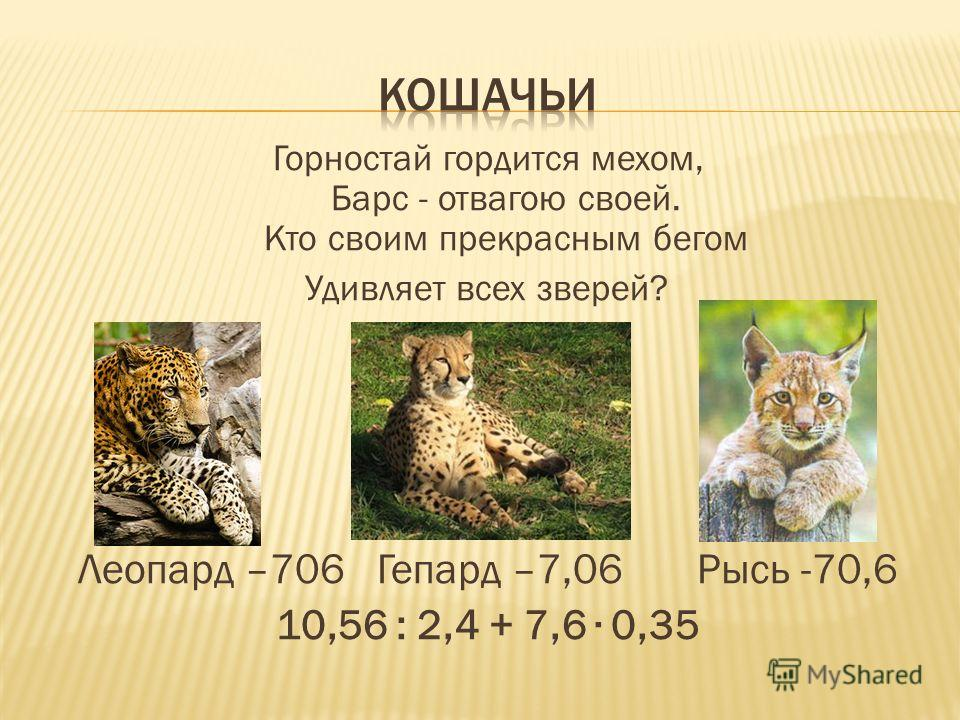 Горностай гордится мехом, Барс - отвагою своей. Кто своим прекрасным бегом Удивляет всех зверей? Леопард –706 Гепард –7,06 Рысь -70,6 10,56 : 2,4 + 7,6 0,35