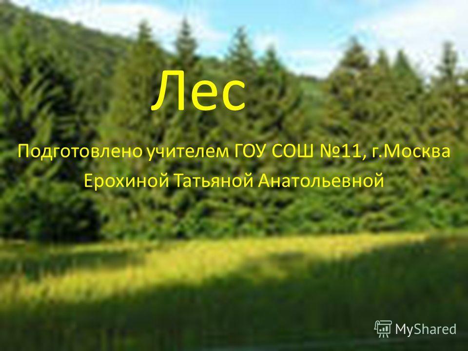 Лес Подготовлено учителем ГОУ СОШ 11, г.Москва Ерохиной Татьяной Анатольевной