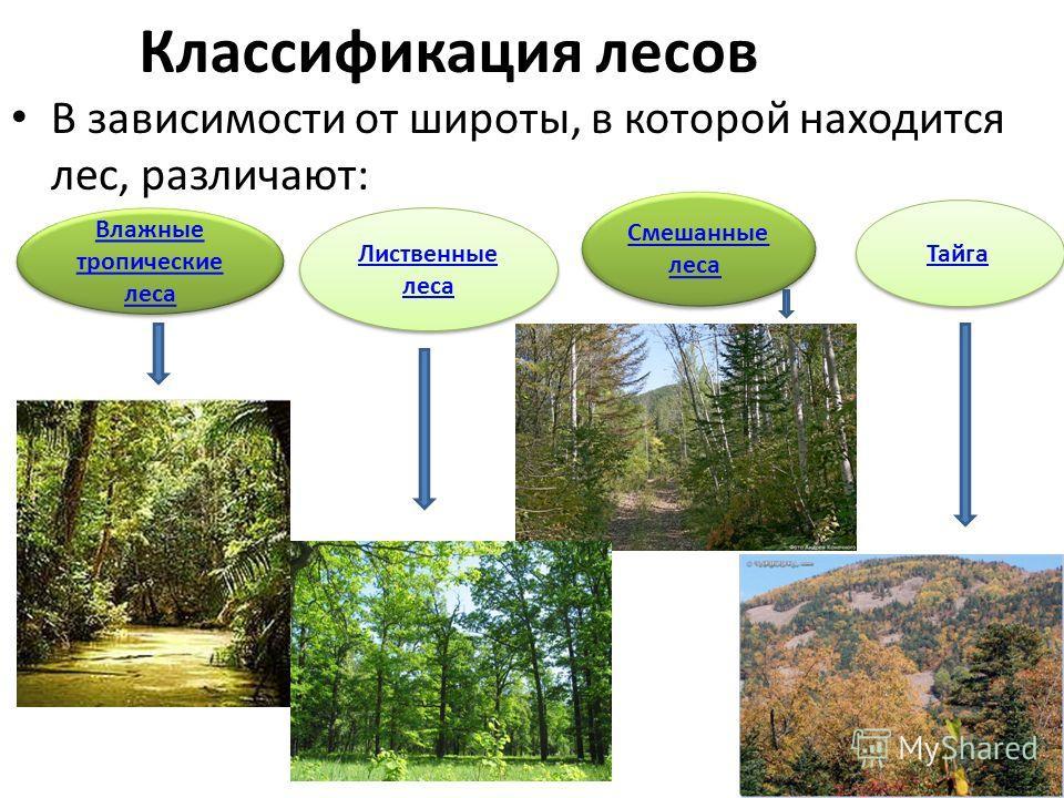Классификация лесов В зависимости от широты, в которой находится лес, различают: Влажные тропические леса Влажные тропические леса Лиственные леса Лиственные леса Смешанные лесаСмешанные леса Смешанные лесаСмешанные леса Тайга