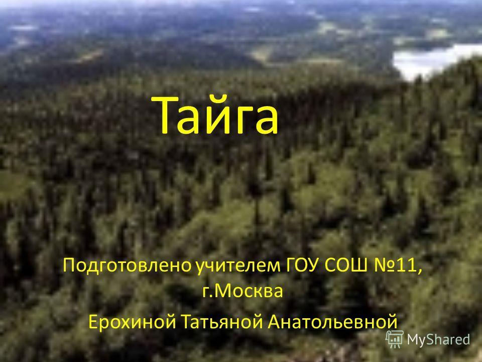 Тайга Подготовлено учителем ГОУ СОШ 11, г.Москва Ерохиной Татьяной Анатольевной