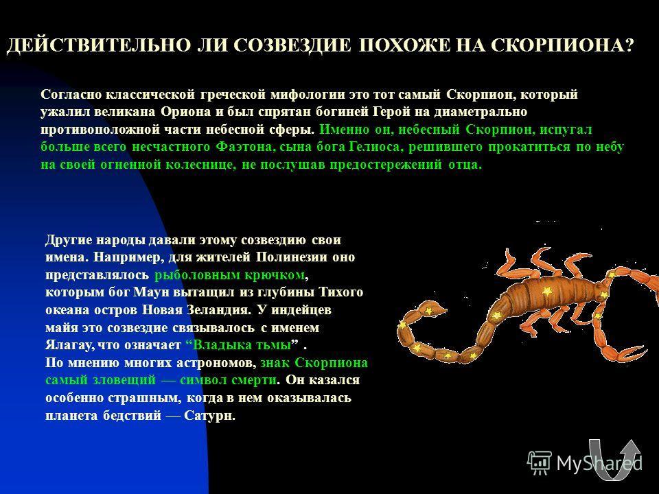 ДЕЙСТВИТЕЛЬНО ЛИ СОЗВЕЗДИЕ ПОХОЖЕ НА СКОРПИОНА? Согласно классической греческой мифологии это тот самый Скорпион, который ужалил великана Ориона и был спрятан богиней Герой на диаметрально противоположной части небесной сферы. Именно он, небесный Ско