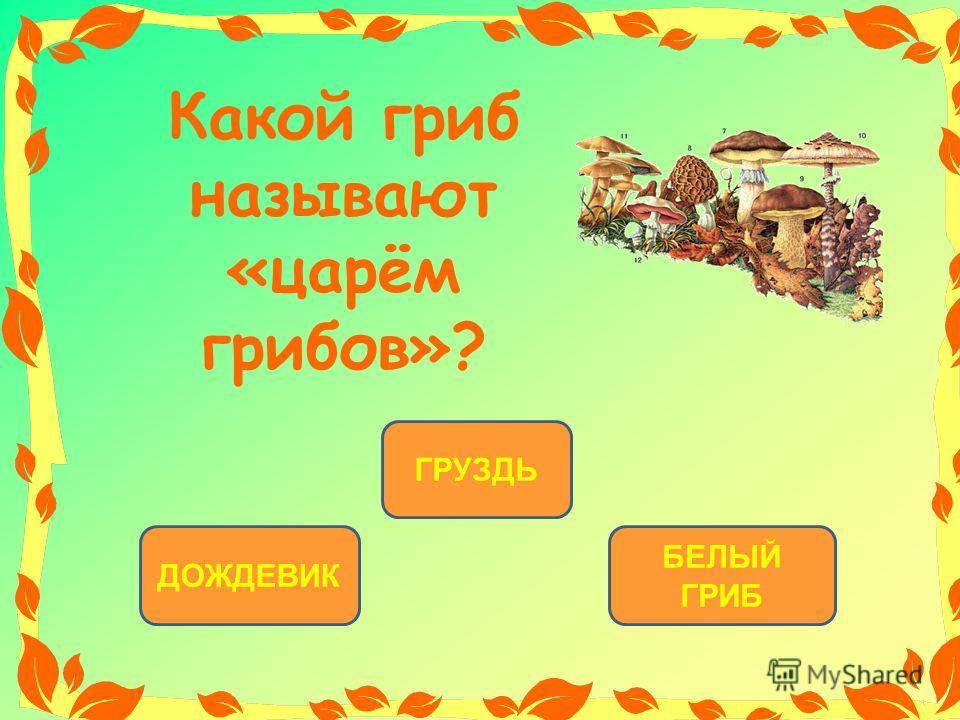 БЕЛЫЙ ГРИБ ДОЖДЕВИК ГРУЗДЬ Какой гриб называют «царём грибов»?