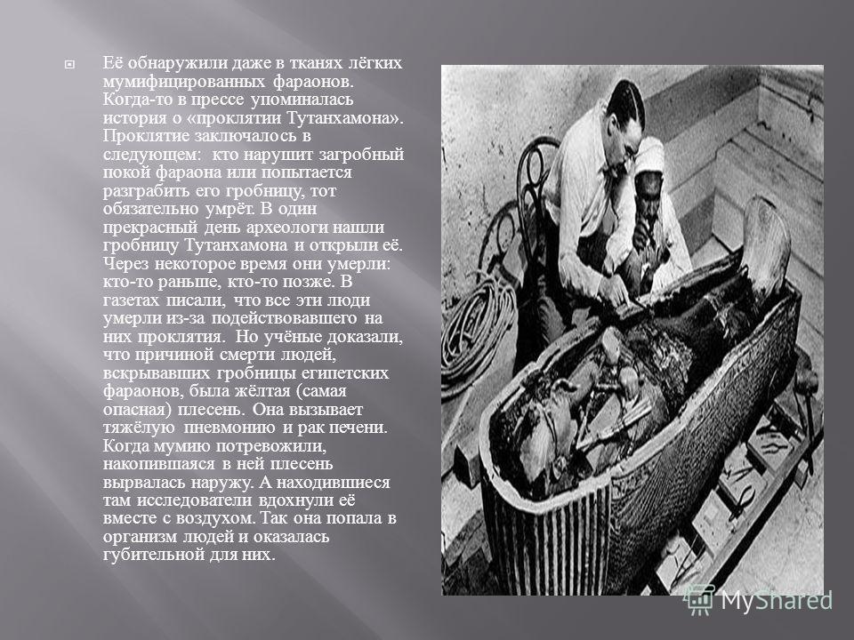 Её обнаружили даже в тканях лёгких мумифицированных фараонов. Когда - то в прессе упоминалась история о « проклятии Тутанхамона ». Проклятие заключалось в следующем : кто нарушит загробный покой фараона или попытается разграбить его гробницу, тот обя