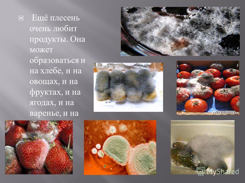 Ещё плесень очень любит продукты. Она может образоваться и на хлебе, и на овощах, и на фруктах, и на ягодах, и на варенье, и на солёных огурцах.