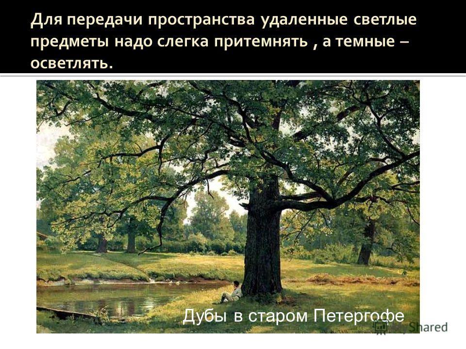 Дубы в старом Петергофе Дождь в дубовом лесу Дубы в старом Петергофе