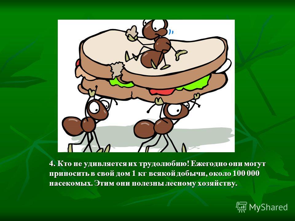 4. Кто не удивляется их трудолюбию! Ежегодно они могут приносить в свой дом 1 кг всякой добычи, около 100 000 насекомых. Этим они полезны лесному хозяйству.