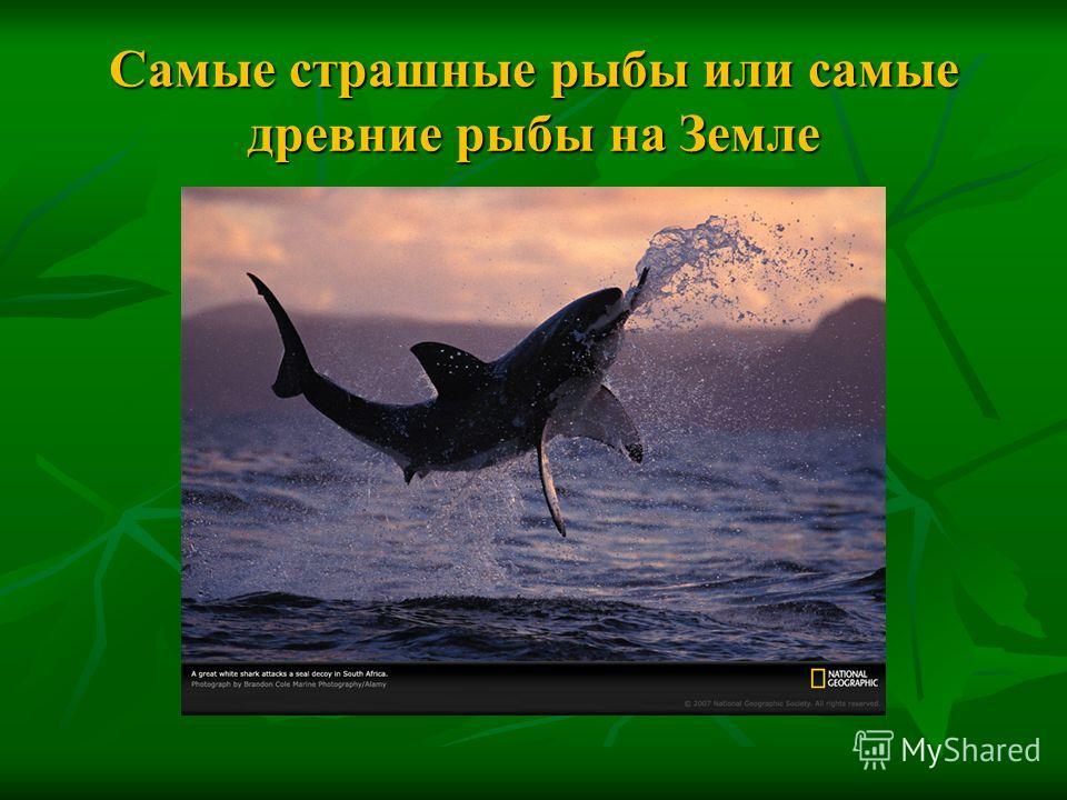 Самые страшные рыбы или самые древние рыбы на Земле