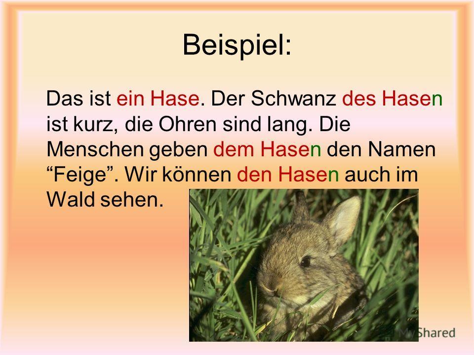 Beispiel: Das ist ein Hase. Der Schwanz des Hasen ist kurz, die Ohren sind lang. Die Menschen geben dem Hasen den Namen Feige. Wir können den Hasen auch im Wald sehen.
