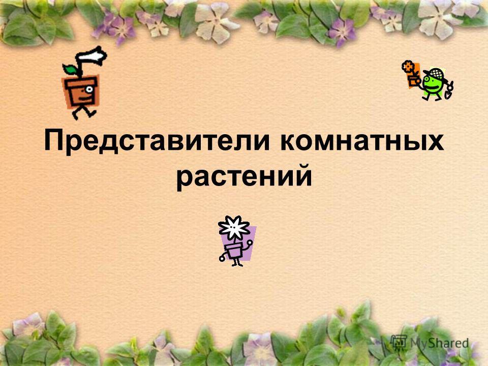 Представители комнатных растений