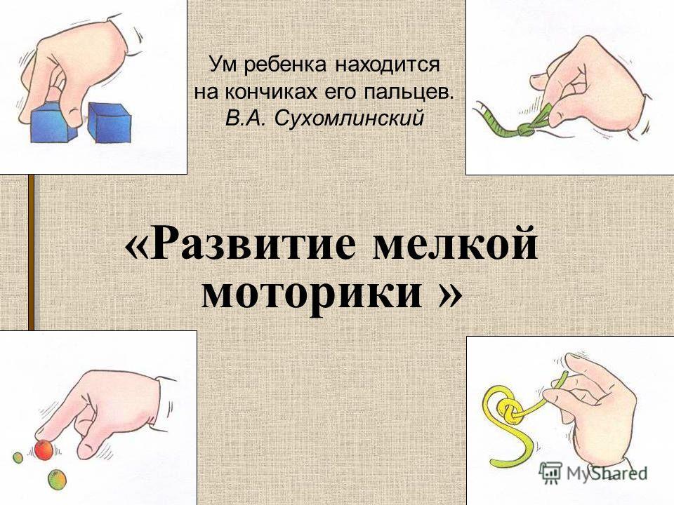 3 «Развитие мелкой моторики » Ум ребенка находится на кончиках его пальцев. В.А. Сухомлинский