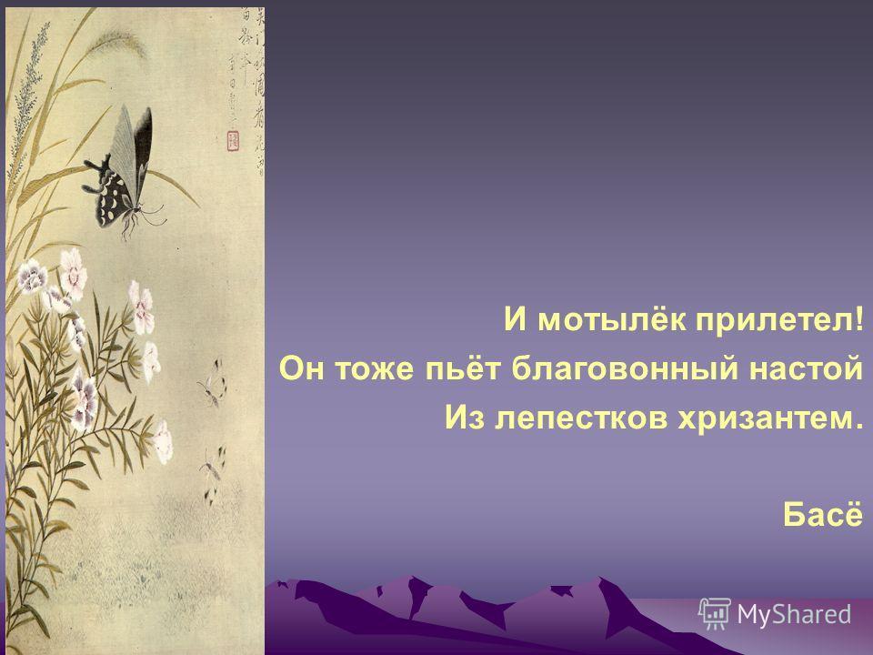 И мотылёк прилетел! Он тоже пьёт благовонный настой Из лепестков хризантем. Басё