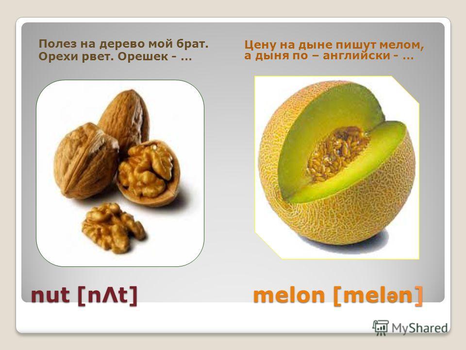 nut [nΛt] melon [mel ə n] nut [nΛt] melon [mel ə n] Полез на дерево мой брат. Орехи рвет. Орешек - … Цену на дыне пишут мелом, а дыня по – английски - …