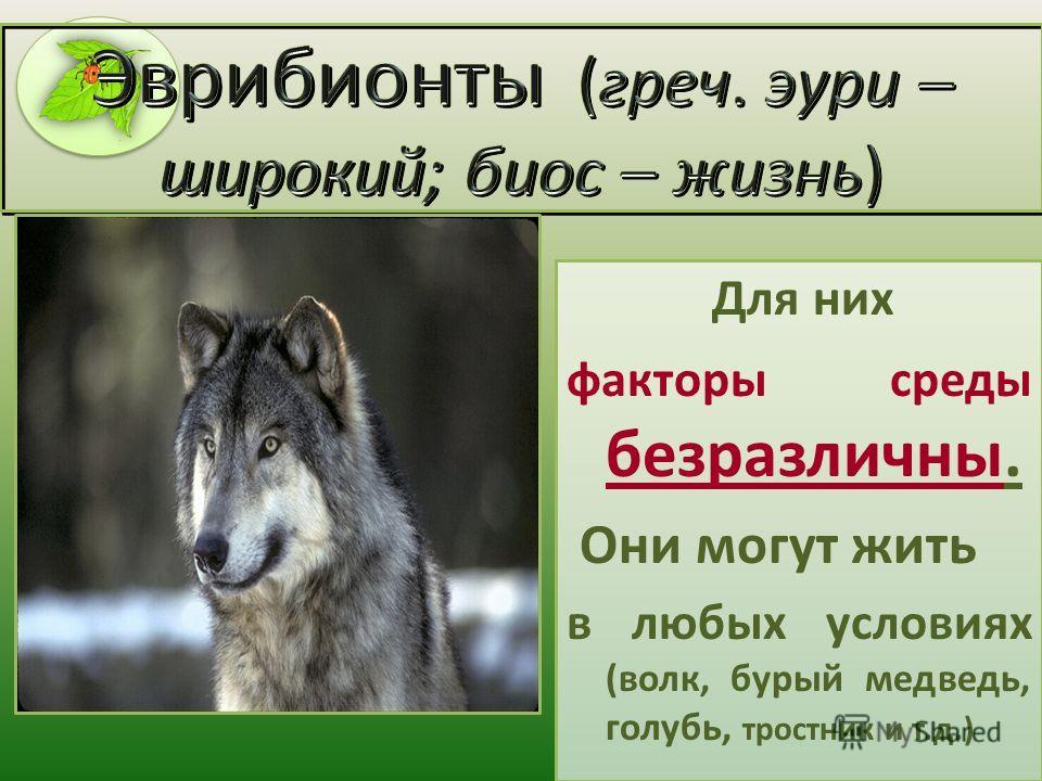 Для них факторы среды безразличны. Они могут жить в любых условиях (волк, бурый медведь, голубь, тростник и т.д.)