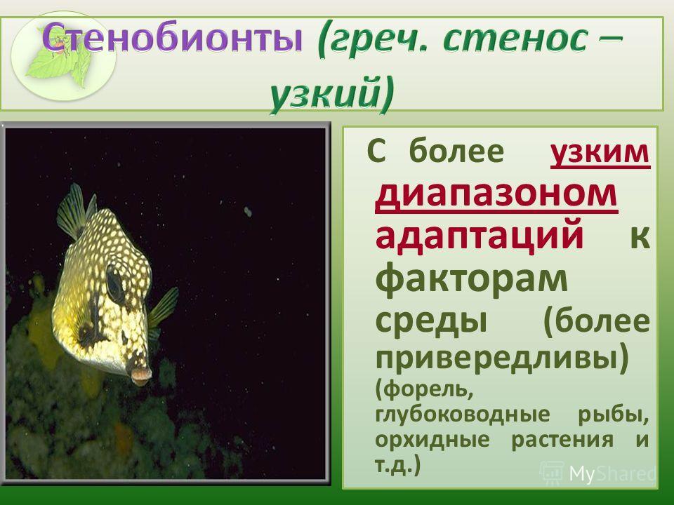 С более узким диапазоном адаптаций к факторам среды (более привередливы) (форель, глубоководные рыбы, орхидные растения и т.д.)