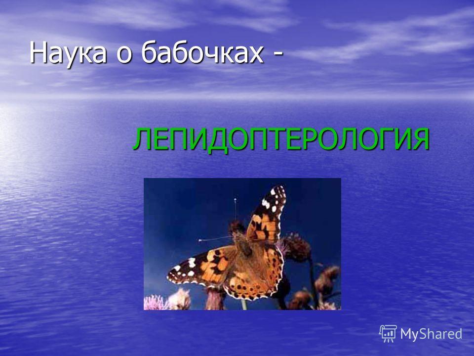 Наука о бабочках - ЛЕПИДОПТЕРОЛОГИЯ ЛЕПИДОПТЕРОЛОГИЯ