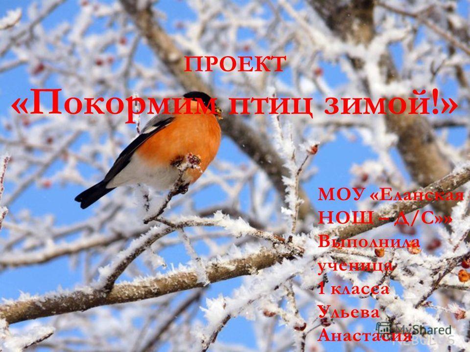 ПРОЕКТ «Покормим птиц зимой!» МОУ «Еланская НОШ – Д/С»» Выполнила ученица 1 класса Ульева Анастасия