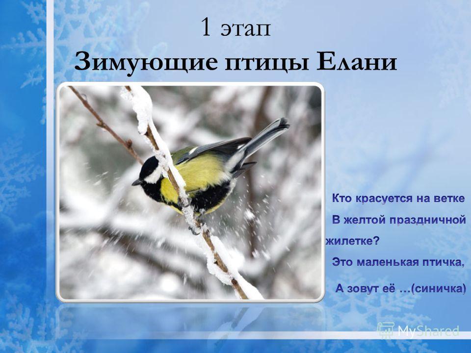 1 этап Зимующие птицы Елани