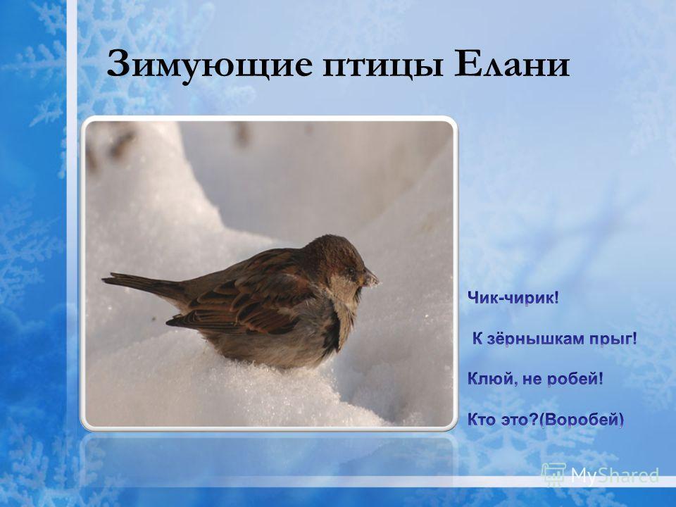Зимующие птицы Елани