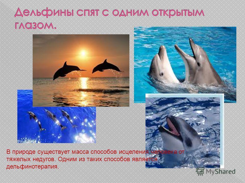 В природе существует масса способов исцеления человека от тяжелых недугов. Одним из таких способов является дельфинотерапия.