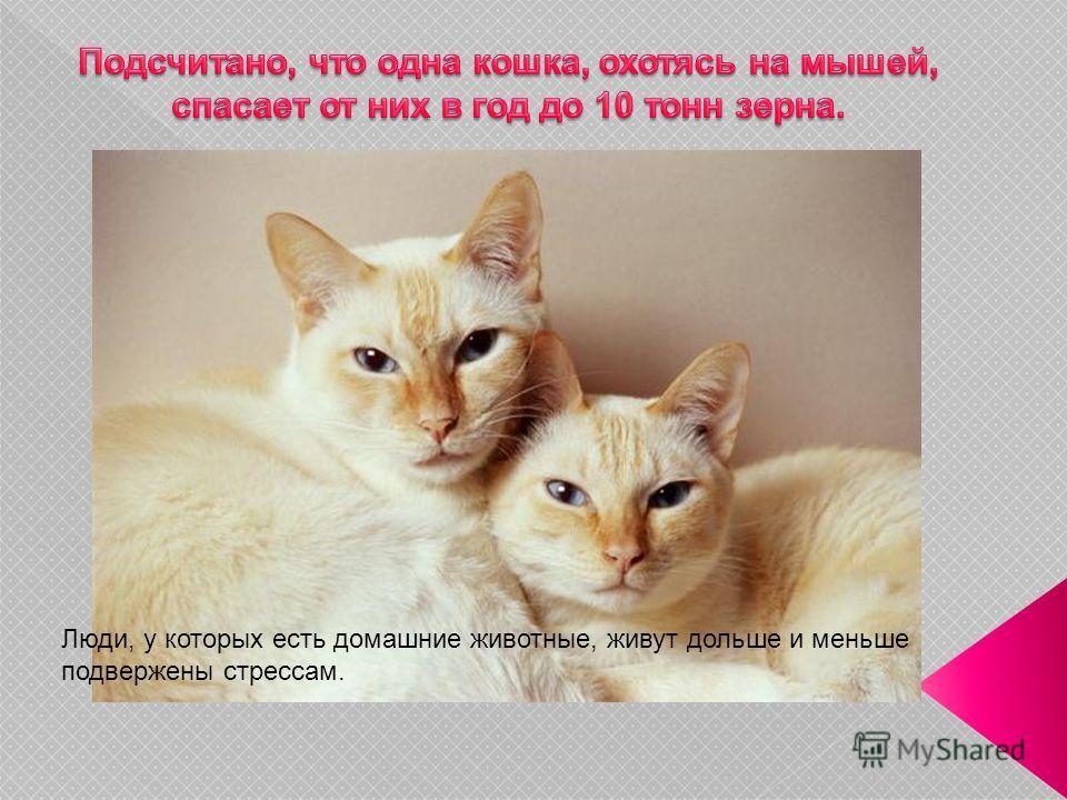 Люди, у которых есть домашние животные, живут дольше и меньше подвержены стрессам.