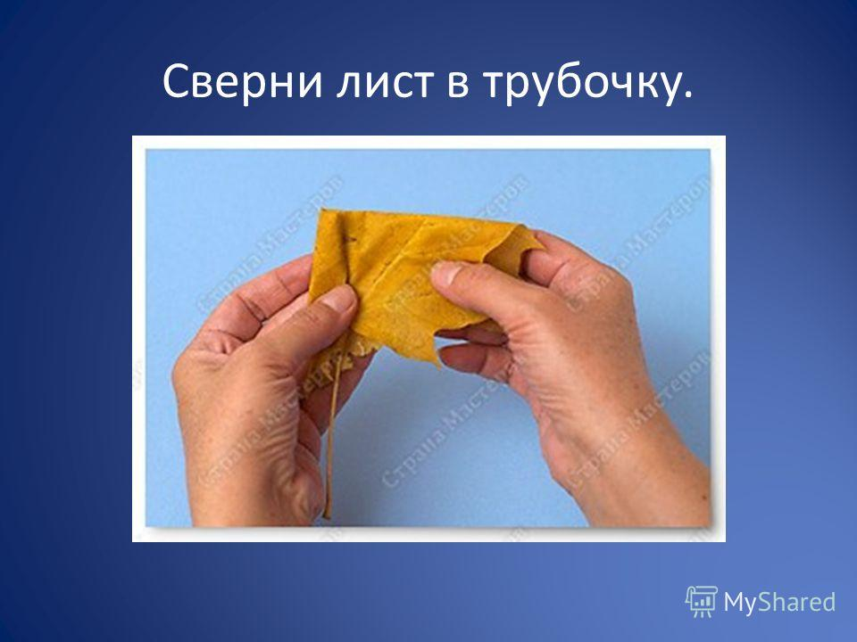 Сверни лист в трубочку.