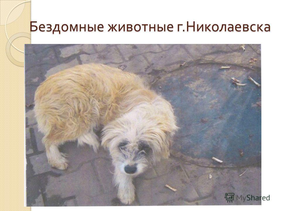 Бездомные животные г. Николаевска