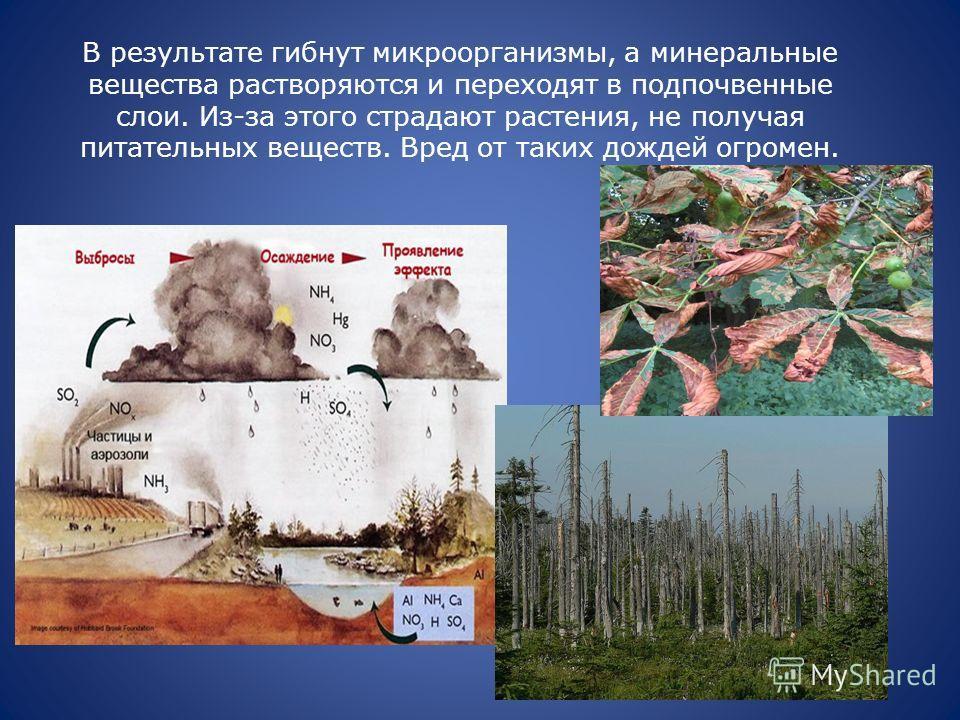 В результате гибнут микроорганизмы, а минеральные вещества растворяются и переходят в подпочвенные слои. Из-за этого страдают растения, не получая питательных веществ. Вред от таких дождей огромен.