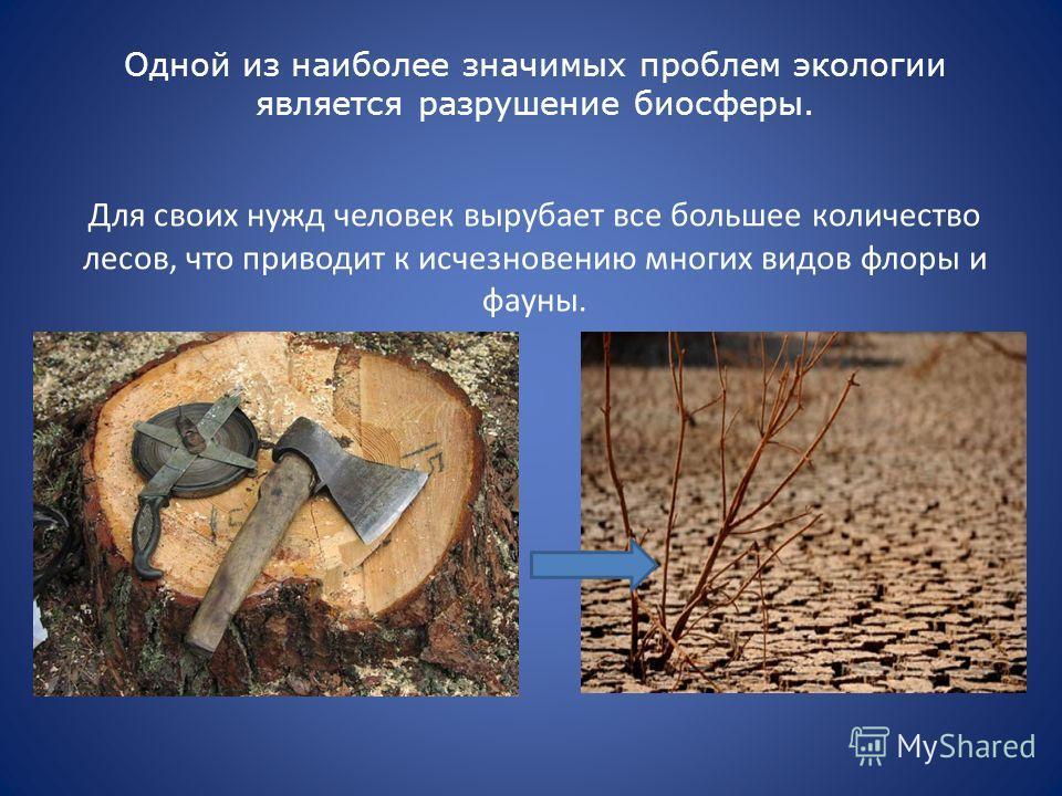 Одной из наиболее значимых проблем экологии является разрушение биосферы. Для своих нужд человек вырубает все большее количество лесов, что приводит к исчезновению многих видов флоры и фауны.