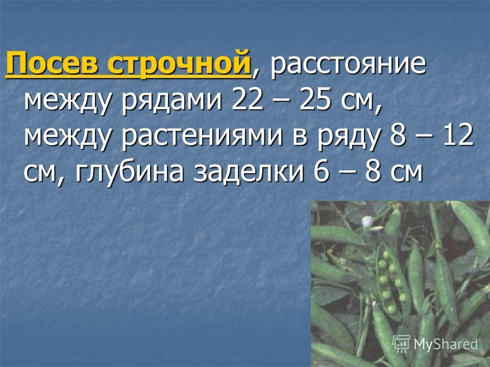Посев строчной, расстояние между рядами 22 – 25 см, между растениями в ряду 8 – 12 см, глубина заделки 6 – 8 см