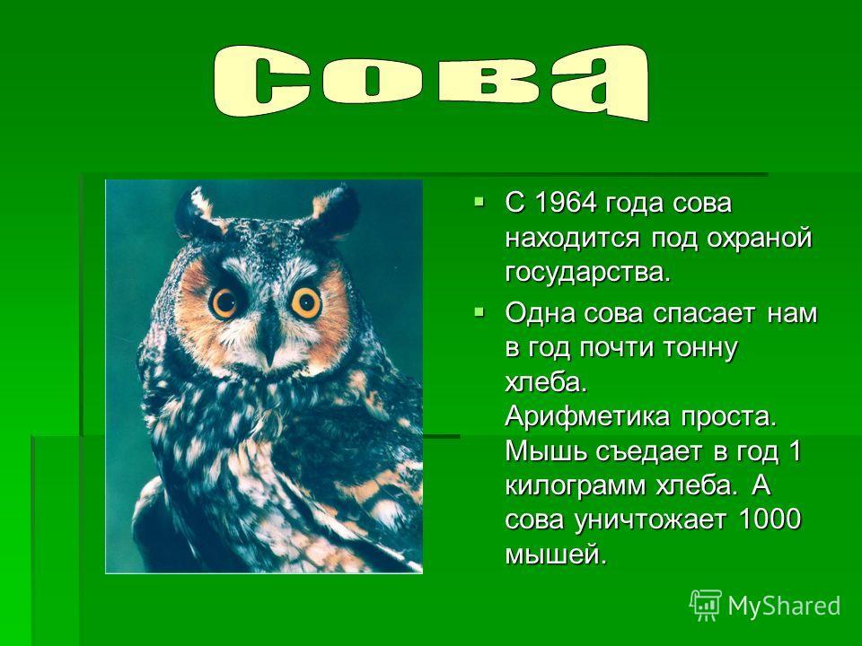 С 1964 года сова находится под охраной государства. С 1964 года сова находится под охраной государства. Одна сова спасает нам в год почти тонну хлеба. Арифметика проста. Мышь съедает в год 1 килограмм хлеба. А сова уничтожает 1000 мышей. Одна сова сп