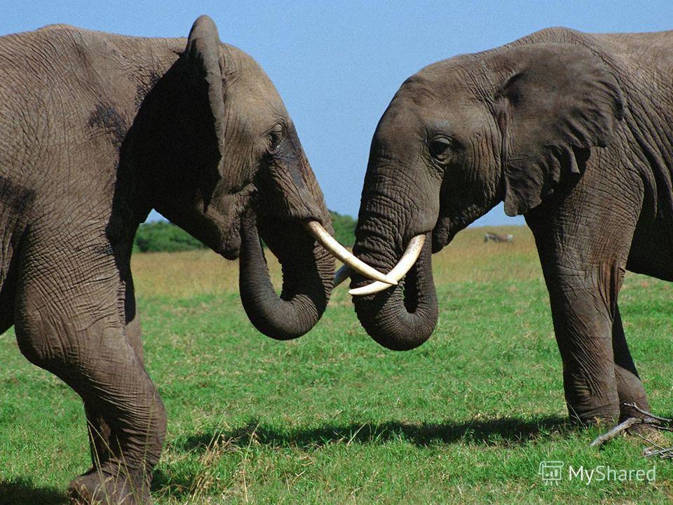 Итак, мы узнали, что мама-слониха имеет массу 600 кг. Найдите массу слонёнка, если известно, что она составляет 1/5 часть от массы большого слона.