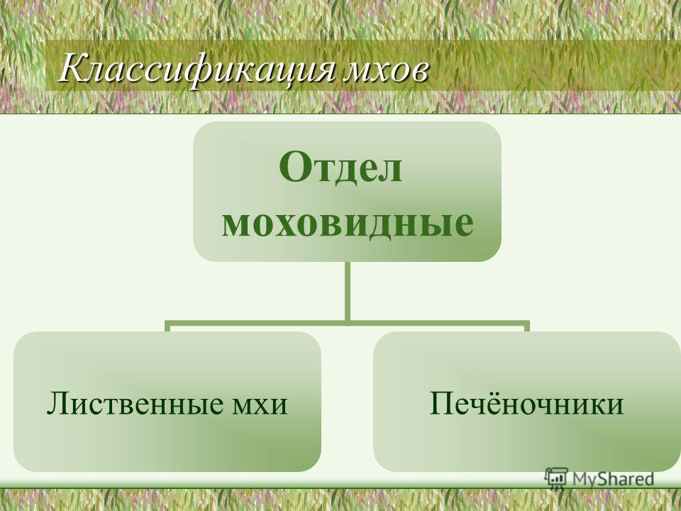 Классификация мхов Отдел моховидные Лиственные мхи Печёночники