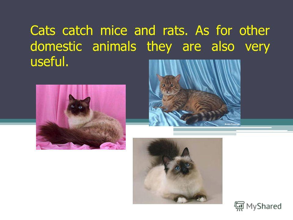 Cats catch mice and rats. As for other domestic animals they are also very useful.