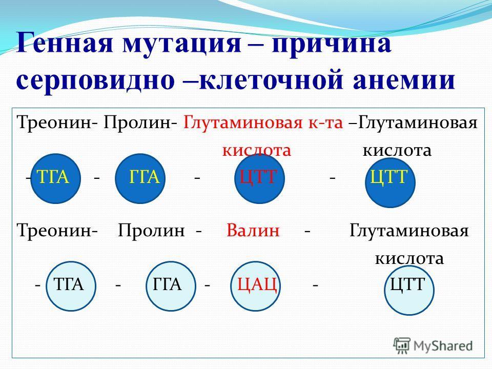 Генная мутация – причина серповидно –клеточной анемии Треонин- Пролин- Глутаминовая к-та –Глутаминовая кислота кислота - ТГА - ГГА - ЦТТ - ЦТТ Треонин- Пролин - Валин - Глутаминовая кислота - ТГА - ГГА - ЦАЦ - ЦТТ