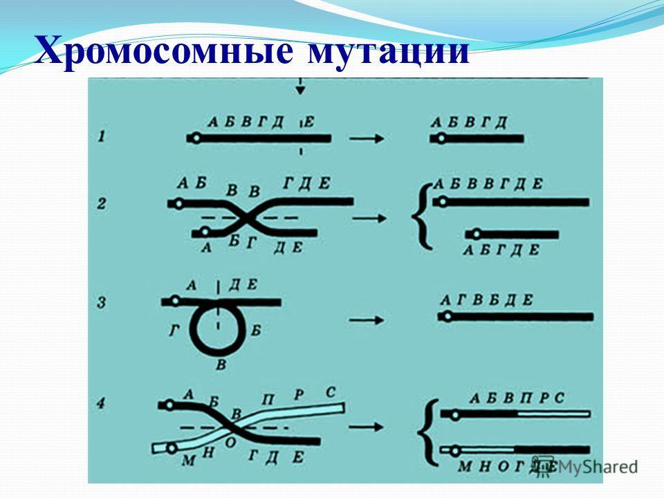 Хромосомные мутации